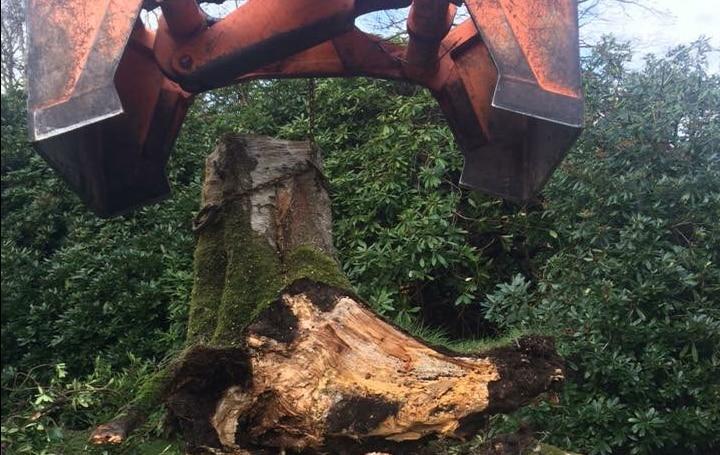 tree_stump_pull_grabload
